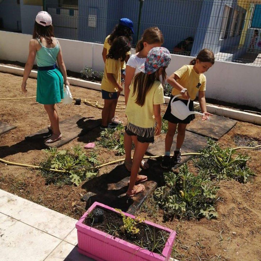 atividade na horta colégio ti-té