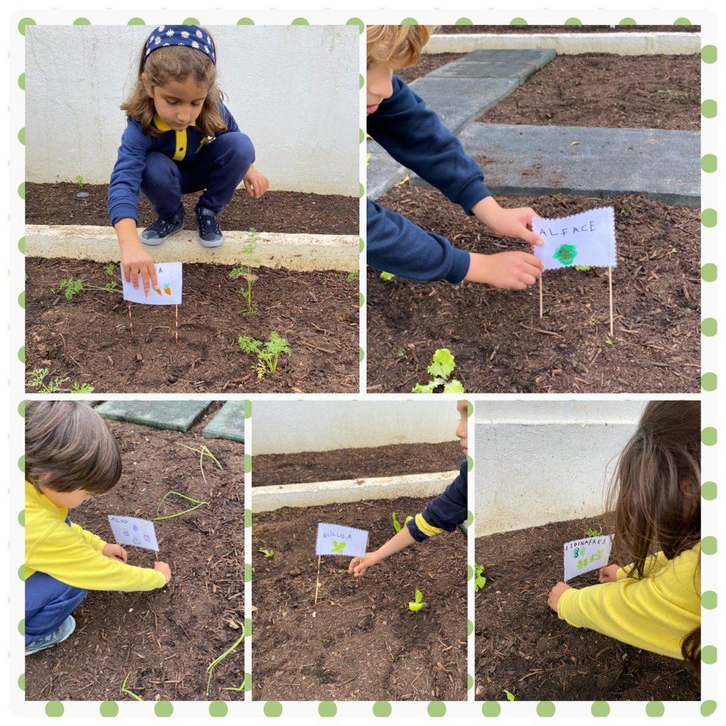 nutriverde-horta-colegio-tite-1